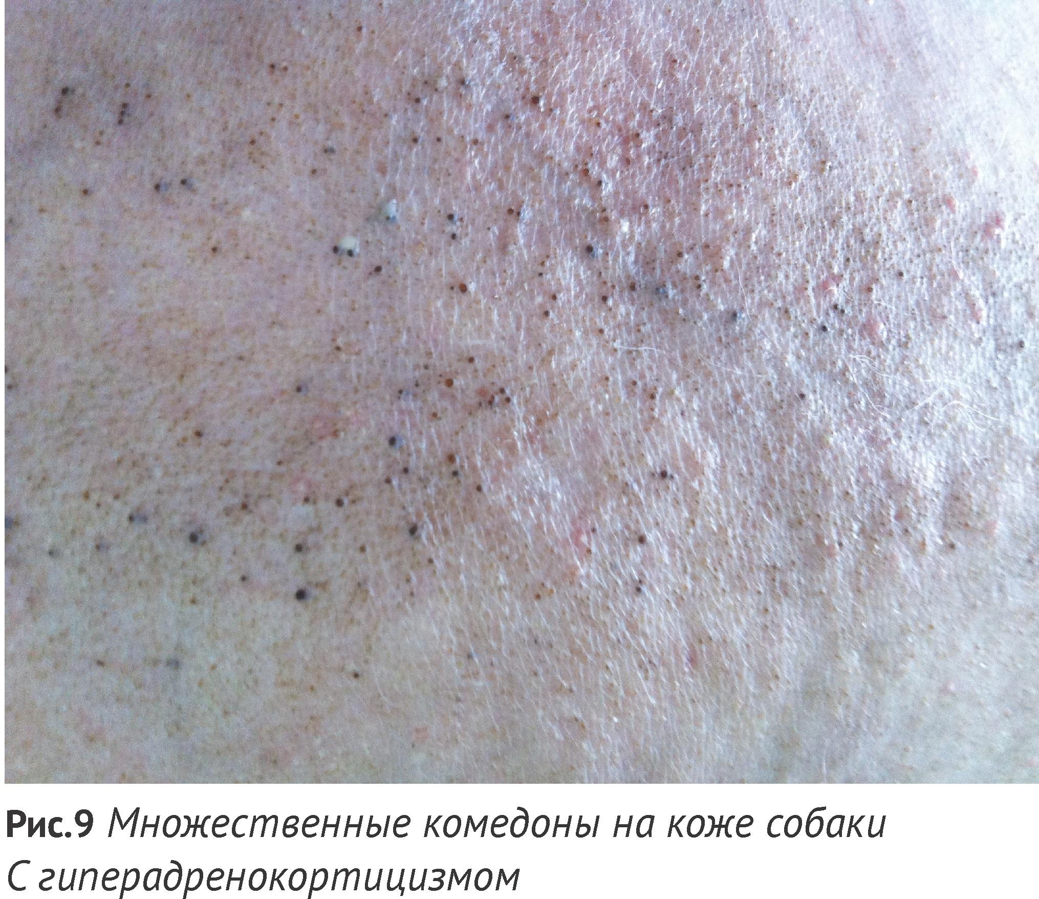 гиперкератоз кожи фото у собак