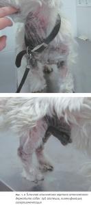 Лечение атопического дерматита собак: основные положения практического руководства Международной группы специалистов по атопическому дерматиту собак (2010 г.). Часть 2