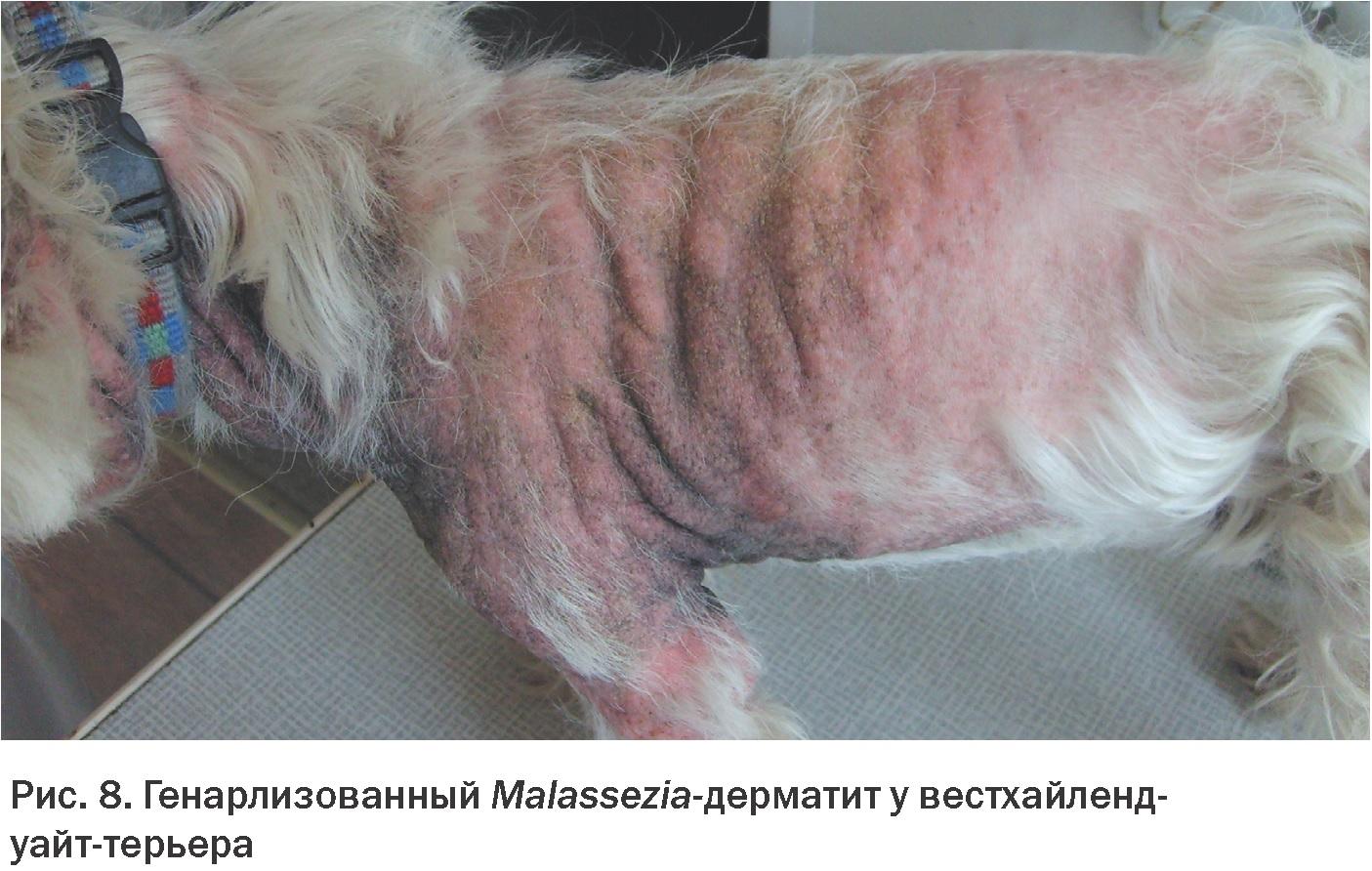 Передается ли рак от животнного