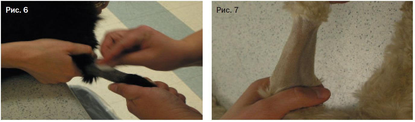 Варикозное расширение вен нижних конечностей лечение народными средствами